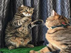 優しいネコパンチ!
