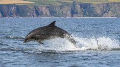 wildlife in Scotland Dundee, Scotland Travel, Dolphins, Wildlife, History, Animals, Small Towns, Animaux, Animal