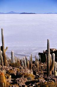 Pescado Island, Salar de Uyuni, Bolivia http://www.travelbrochures.org/252/south-america/travel-the-incredible-bolivia