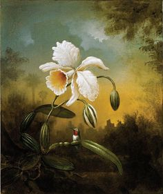 ORCHID - kevin sloan