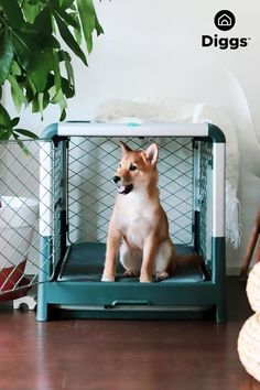 A dog crate that looks amazing in your home? Yes please. ✨🐕 From high-end materials, to our unique diamond wire mesh, we've thought of everything.