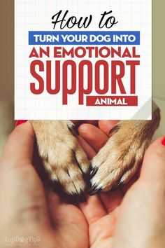 Dog training tips. How to turn your dog into an emotional support animal. Let's see 5 quick tips to a smarter dog Training Your Puppy, Dog Training Tips, Potty Training, Agility Training, Training Classes, Service Dog Training, Army Training, Training Academy, Training Schedule