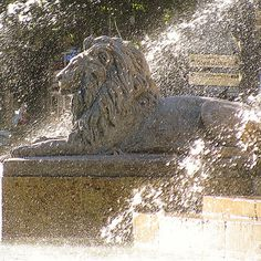 I photographed this fountain in Aix-en-Provence, France. I love the effect of the backlit spray of water with the lion silhouette. #fountain #lion #architecture #architect #art #mcintoshnesbit #sculpture #landcapearchitecture #lifestyle #inspiration #style #statue #water #luxury #antiques #french #frenchliving #designer #design #decor #decorator #interiors #interiordesigner #interiordesign #photography #fountains #aixenprovence #provence