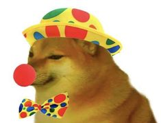 Meme Pictures, Reaction Pictures, Haha Funny, Funny Dogs, Dankest Memes, Funny Memes, Cursed Images, Animal Memes, Doge