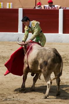 #photo du matador Sergio Flores (19 ans) Mexique, qui a été encorné par un Toro Bravo lors de la Feria de Céret, France 2010 #corrida