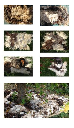 Felted Rug from Raw Fleece. And some left overs  as ground cover :)