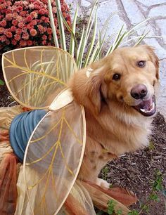 Dress Up Dogs: Fairy Dog Mother