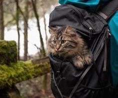Most of the time when you're out on a nature-like adventure, you see a lot of dogs. People like to bring their dogs on hikes, trips, vacations, boat rides