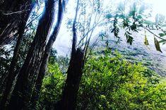 #sashakrauser #hiking #peacefullplace #teamzulu #974✌🏼️🌺🌴#974island #iledelareunion #gotoreunion #ileintense #LaReunion #ReunionIsland #forest #nature #naturelovers #islandlife #pentax #montain #primitive #primal #cilaos #fleursjaunes #forest #jungle #islandvibes #paradise #clouds #misty