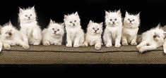 What the Number of Cats You Own Says About You....hmm #cats