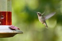 hummingbirds...reminds me of our trip to the bottom of a canyon in Colorado with mom!