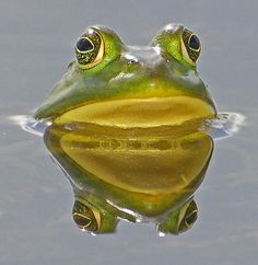 """Frog in a little pond can be much happier than fish in a vast ocean!"" ~~Mehmet Murat ildan ~~X ღɱɧღ"