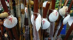 Walking sticks and shells - pilgrims all carry them on their journey to Santiago. @Suzanne Naughton  #Camino #The Way #Santiago de Compostela #Spain