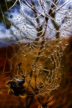 Web of Mist(ery) by Alan Sheers.  Confession: I love spider webs with dew or sunshine on them.