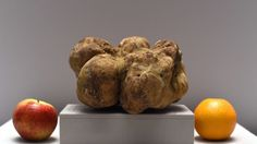 The Five Most Expensive Truffles Ever
