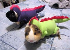Guinea pigs as dinosaurs