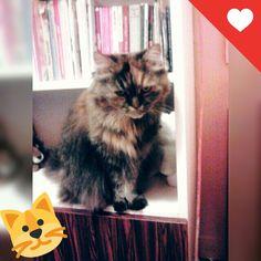 My cat... Gombi ❤