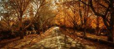 Muitos consideram o outono a melhor época do ano para visitar a Europa. Menos multidões e filas, clima ameno, preços mais em conta e paisagens de t