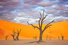 Image: This dead acacia tree is in Dead Vlei, an old saltpan named for its eerie appearance  inside the Namib-Naukluft Park in Namibia. Water was cut off when the flow of the Tsauchab River changed its course approximately 500 years ago.   http://www.alexshay.com/