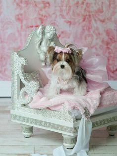 Swarovski Angel Pet Bed by YvetteRuta on Etsy