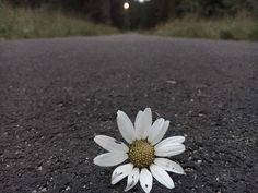 #nature #flowers #idea #memory #memories #white #light #amazing #pure #magic #night #lonely #green #dimension ❤️RY❤️