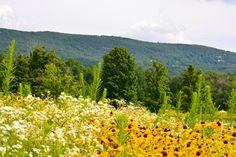 . Storm King Art Center, Hudson Valley, Acre, Fields, New York City, Sculptures, River, Mountains, Landscape