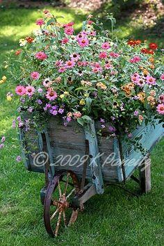 Gorgeous old wheelbarrow planter ... a coat of paint makes it last longer outdoors. | The Micro Gardener