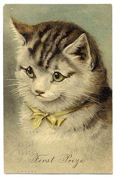 Google Image Result for http://eyedealpostcards.com/images/postcards/CatFirstPrize5887.jpg