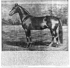 The Columbia herald. Agriculture Industry, February 13, Tennessee, Columbia, Horses, Animals, Image, Animales, Animaux