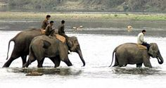 Jungle safari in Nepal. Special Vacation Packages for Everyone and Best Price.