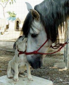 I wuv you. Horse and puppy love.