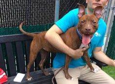 TO BE DESTROYED 06/15/17: ****CAN BE PUBLICLY ADOPTED**** A volunteer writes: Selyce thrones like a queen, majestic, on her bed, at the back of her kennel. Two days ago, she would not come out. Today is a different day. Selyce (a most unusual name) was leashed in no time and exited in a rush to the street. Yep, she is a fast walker, does her business on the way and pretty much ignores at this point birds and other dogs. The yard is really the place to go when one wants to