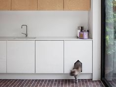 Cat Care Indoors 20 Creative Indoor Cat Playground Ideas - Don't even try to deny it. Many of us love pets. It could be a dog or a cat. But today, let us talk about cats. Have you seen your cats crawling around Hidden Litter Boxes, Litter Box Covers, Cat Litter Tray, Cat Toilet, Cat Playground, Playground Ideas, Indoor Playground, Cat Room, Cat Wall