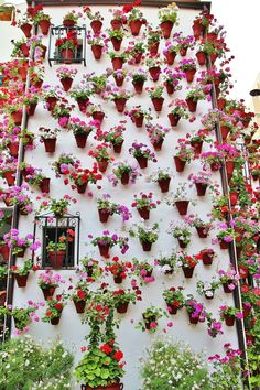 La Fiesta de Los Patios de Cordoba,, Spain, May, 2013