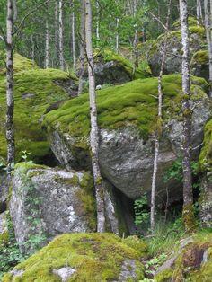 Boulders and Moss by ~Jezhawk Photo Background Images, Photo Backgrounds, Fantasy Landscape, Landscape Pics, Aquarium Landscape, Natural Structures, Fantasy Forest, Moss Garden, Forest Photography