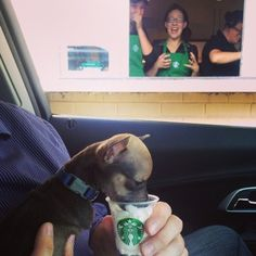 39 Dogs That Like Starbucks Way More Than You Do
