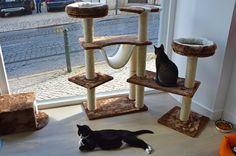 Em Lisboa, o Aqui há Gato é um café e biblioteca onde todos os que gostam de gatos são bem-vindos. Já várias cidades europeias têm espaços onde se pode desfrutar da companhia dos felinos, enquanto se lê um livro e se bebe um café, agora também encontra o conceito na capital portuguesa. O … http://www.viajecomigo.com/2016/08/14/aqui-ha-gato-cafe-e-biblioteca-em-lisboa/