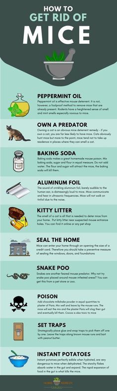 how to get rid of mice #pestcontrolhowtogetrid