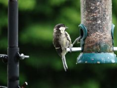 I do love the wildlife that visits us. July 2014