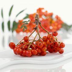 Jeřabiny jsou nedoceněnou surovinou. Pomohou s dietou a posílí imunitu. Paleo, Herbs, Fruit, Food, Nature, Syrup, Naturaleza, Essen, Beach Wrap