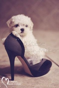 Image result for fall maltese dog pictures