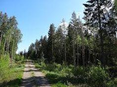 Kuvahaun tulos haulle metsänhoitotyöt