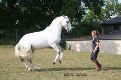 Comment acquérir le respect de son cheval ? | Magazine Cheval / MonChval Mag : Bien plus qu'un magazine sur le cheval et l'équitation !