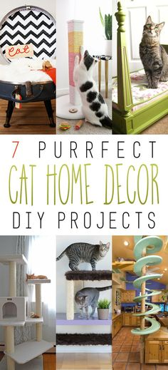 7 Purrfect Home Decor Cat DIY Projects - The Cottage Market
