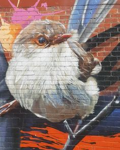 Came across a cool alleyway full of graffiti. Just before all the thunderstorms rolled in i saw this Fairy-wren. #art #amosadventures #fairywren #graffitiart #birb #birds #beaitiful #alleyway