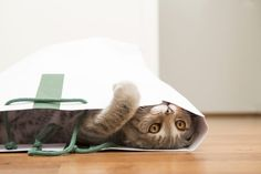 Indoor Cat Activities to Keep Your Kitty Healthy and Active