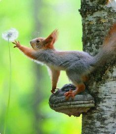 Ideas funny animals squirrel nature for 2019 Cute Funny Animals, Cute Baby Animals, Nature Animals, Animals And Pets, Wildlife Photography, Animal Photography, Beautiful Creatures, Animals Beautiful, Cute Squirrel