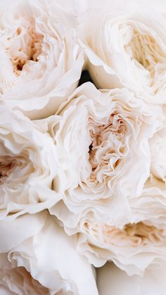 Garden roses for the win 🌹 Aesthetic Backgrounds, Aesthetic Iphone Wallpaper, Aesthetic Wallpapers, Iphone Background Wallpaper, Flower Wallpaper, Flower Aesthetic, Gold Aesthetic, Aesthetic Pictures, Cute Wallpapers