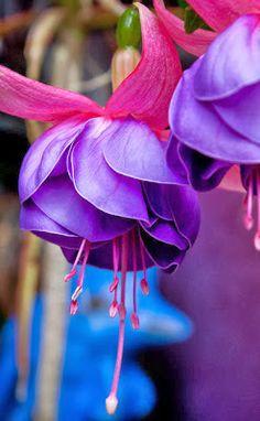 Purple beauty • photo via Marie Nouvelle