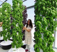 20 Best Vertical Gardens Images Aquaponics Hydroponics 640 x 480